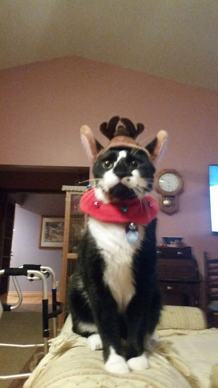 Meowy Christmas, Now Get These Stupid Antlers Off Of Me…