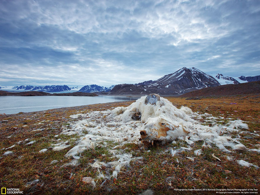 First Place Winner, Environmental Issues: Life And Death, Svalbard And Jan Mayen