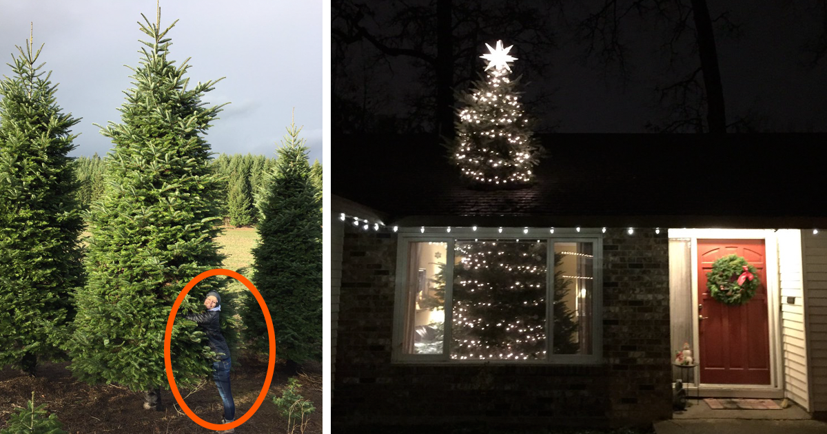 They Bought A 20ft Christmas Tree, And Found A Brilliant