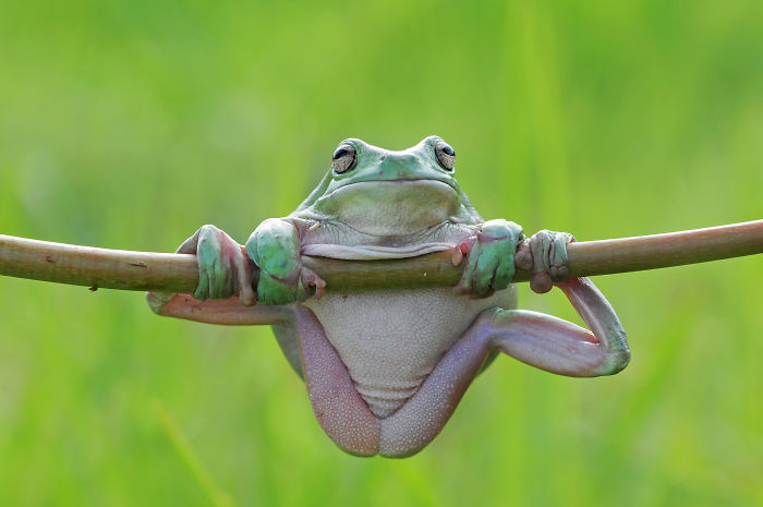 How Cute And Funny The Frogs