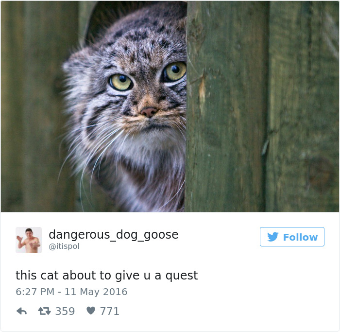 Of The Best Cat Tweets Of Veriy - The 27 funniest tweets about cats in 2016