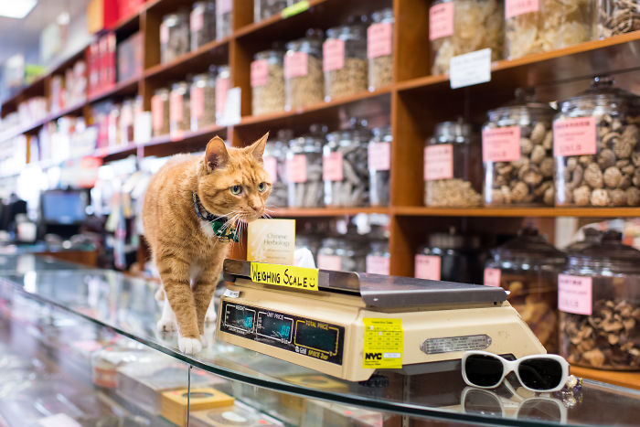 I Spent Last Summer Photographing Cats In Shops All Over NYC