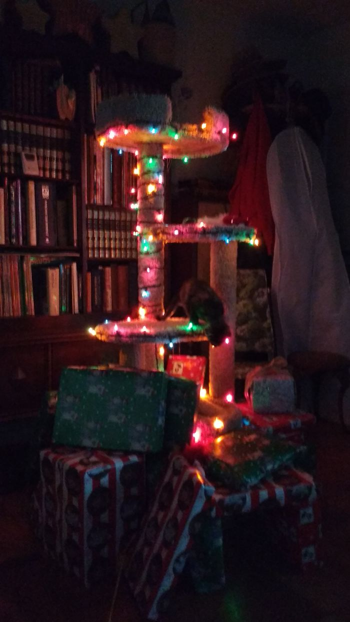 This Year's Kitten-proof Christmas Tree.