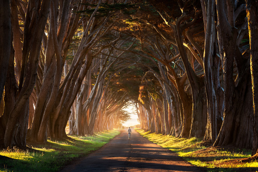 Cypres Tree Tunnel, California