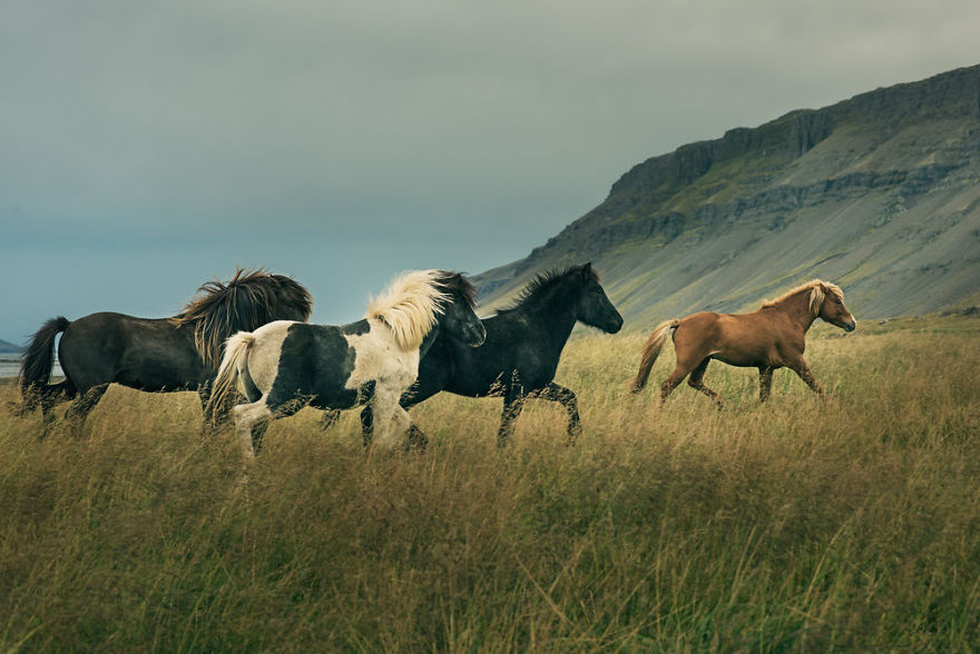 I Documented The Surprising Side Of The Rugged Wild Horses Of Iceland