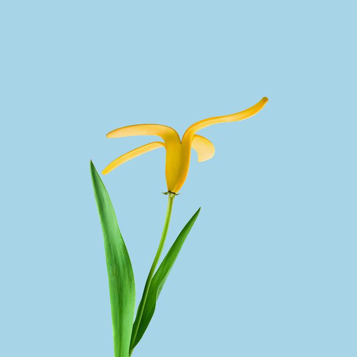 Flower + Banana Peel