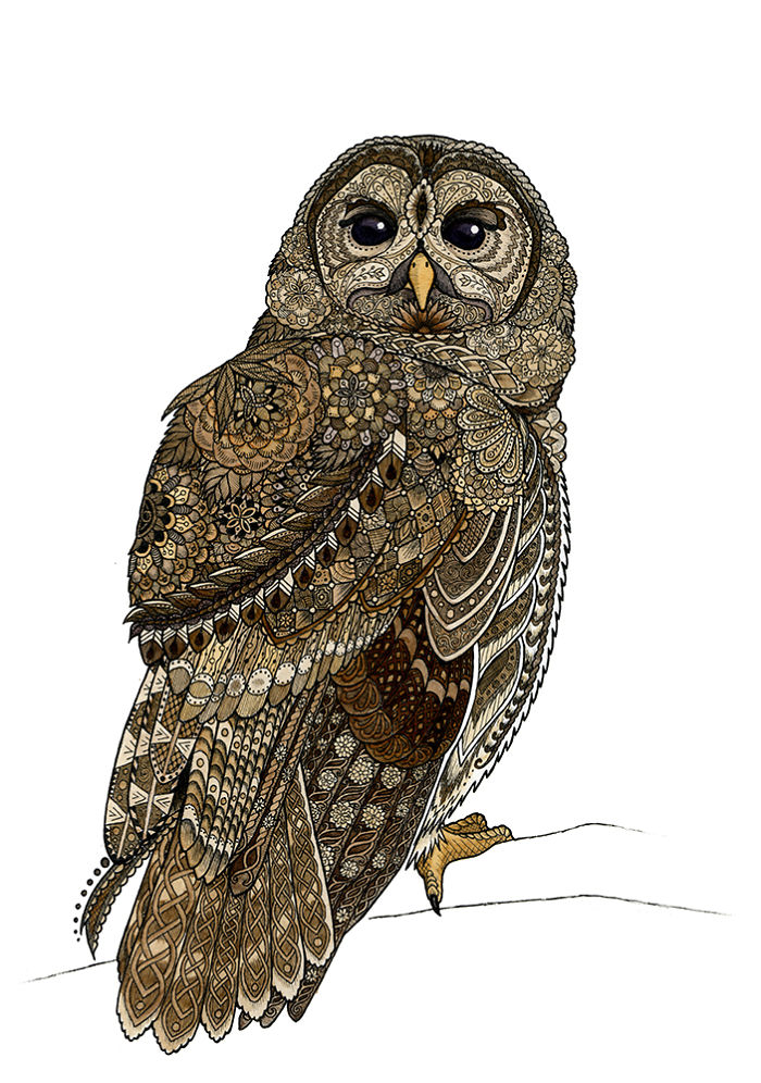 It's just a graphic of Intrepid Barred Owl Drawing