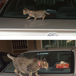 Cat Then And Now