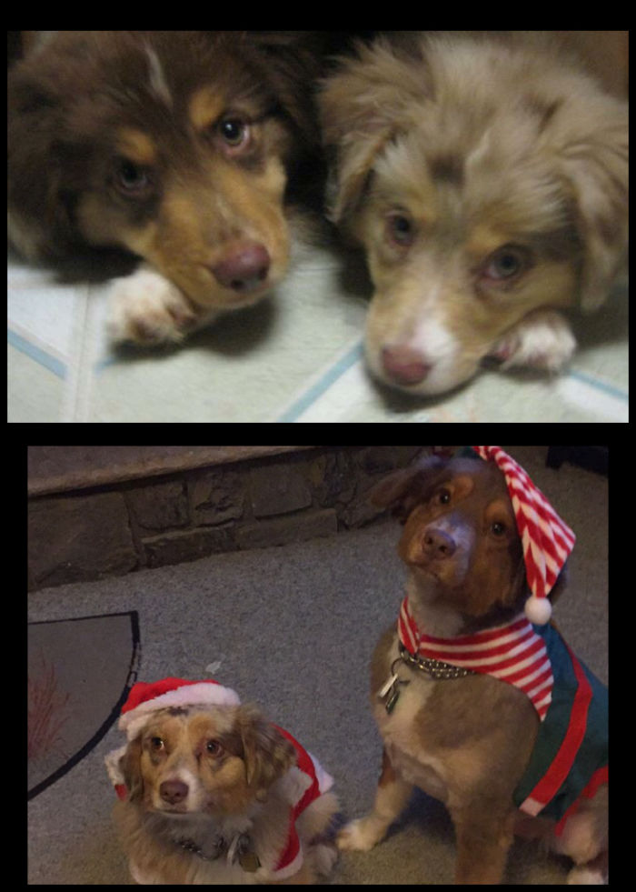 Puppies From The Same Litter Together Forever, Piper And Cubby