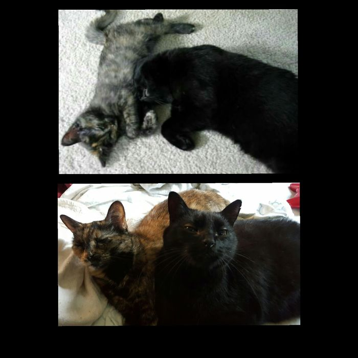 Chloe And Magick, About 9 Months Apart, 11 Years Ago And Now.