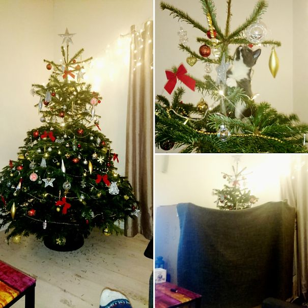 Keep Cat Away From Christmas Tree: 15+ Genius People Who Found A Way To Protect Their