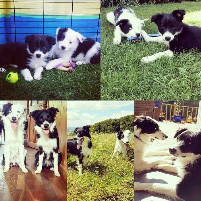 Archie & Beau ♡