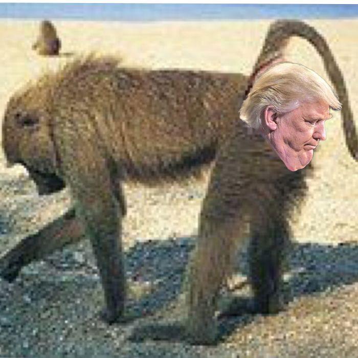 Baboon Butt