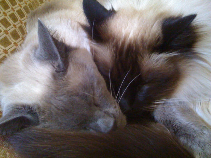 They Were Inseparable For 12 Years, Til This Past Thanksgiving Day When Aiko Left Us And Went To Rainbow Bridge.