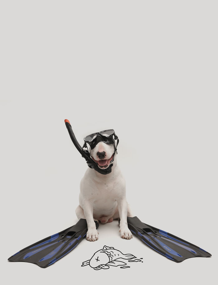 How A Bull Terrier Won A Webby Award (the Oscars Of The Internet)