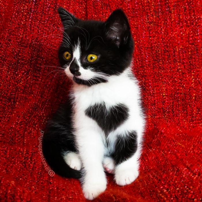 Szív alakú mintázattal a bundájában született Zoë, a népszerű cicus