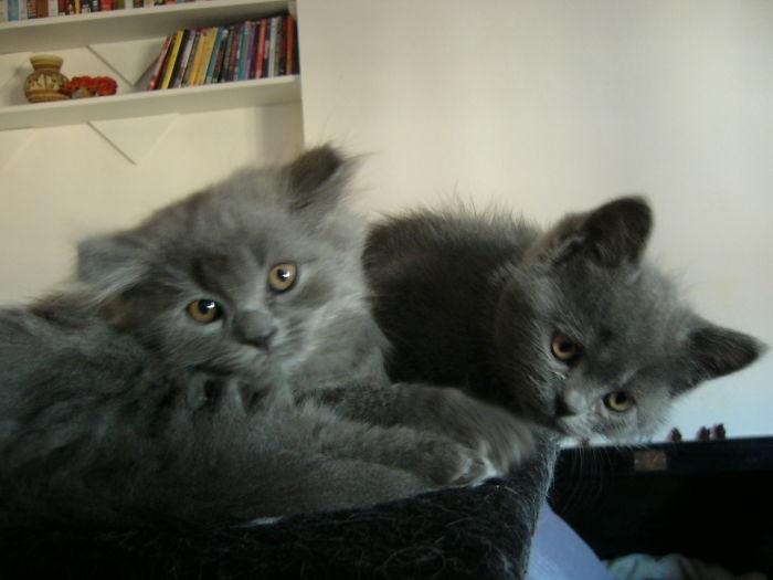 Murphy & Toshio, Grey Lovely Brodas.