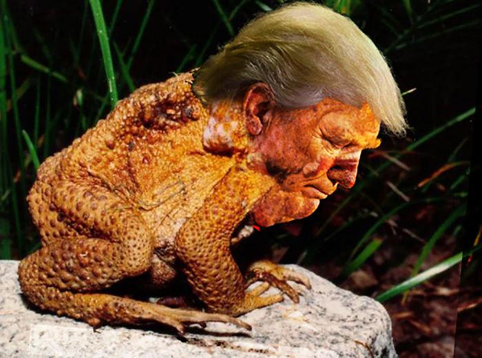 Trumpollywog