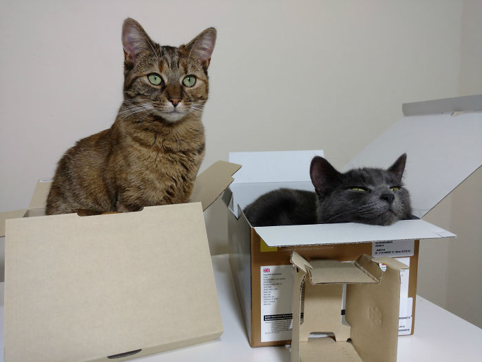 Unboxing… Not So Easy With Cats