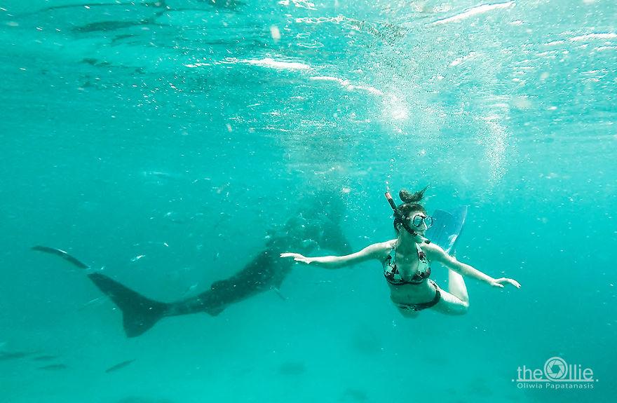 I Photographed The Beauty Of Giant Whale Sharks