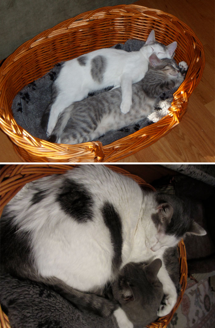My Cats When They Were A Few Months Old Compared To Now, 4 Years Later