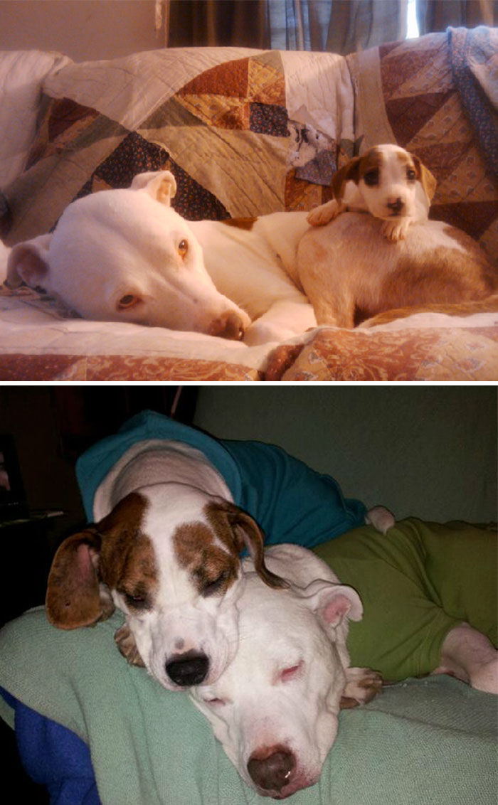 Fiona And Shrek. 3 Years Ago, And Now