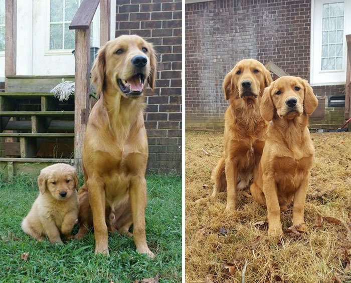 Blue And Belle Then And Now 4 Months Later