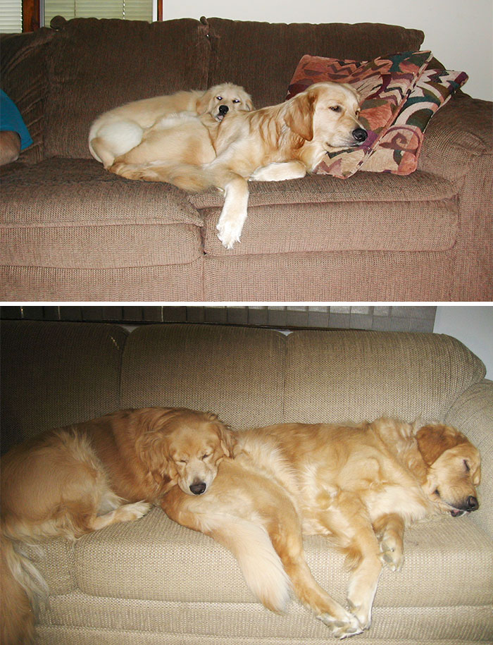 Sharing The Couch Then And Now
