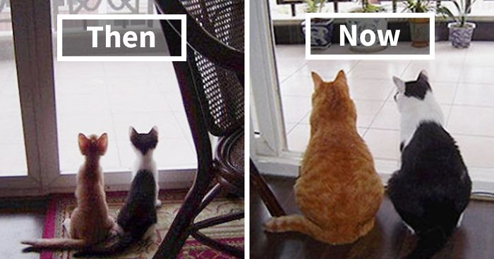 50 Before & After Pics Of Animals Growing Up Together