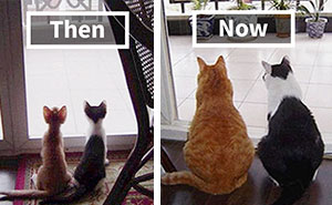 15+ Before & After Pics Of Animals Growing Up Together