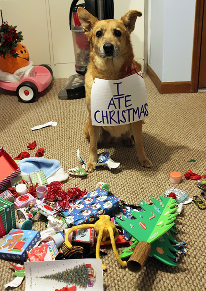 110 Pets That Hate Christmas More Than Anything Bored Panda