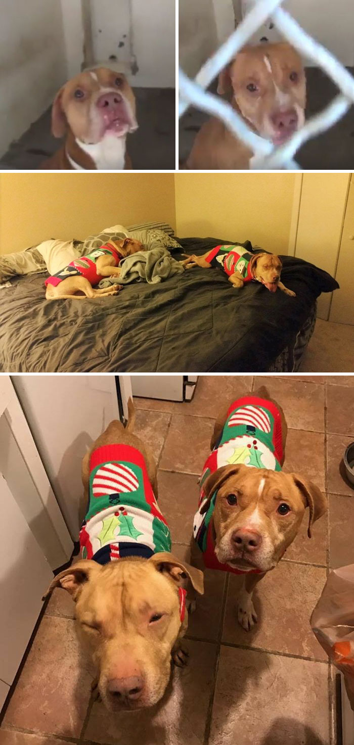Dog Brothers Kept Separately In The Shelter For 118 Days, Find Home Together Right Before The Holidays