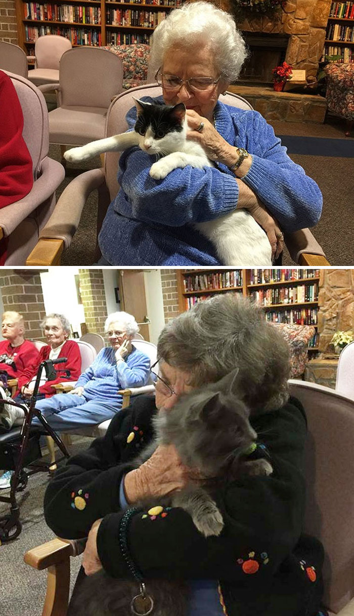 Shelter Brings Senior Cats To Seniors In Nursing Homes So They Can Comfort Each Other