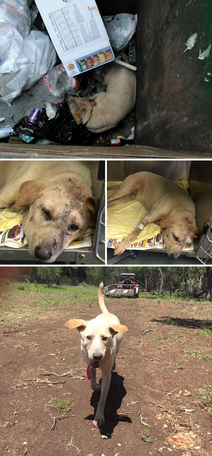 Dog Left In The Dumpster Was Suffering From Heat Stroke, Luckily Someone Saw Her And Saved Her Just On Time