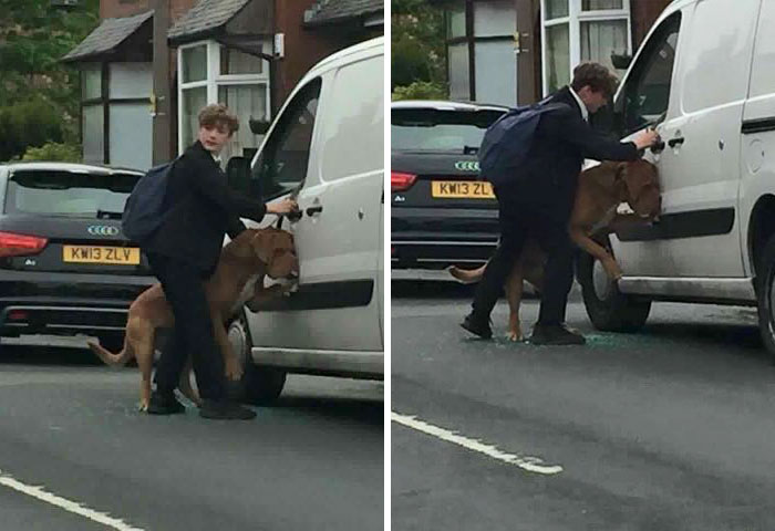 Boy Rescues Dog Which Hanged Itself Trying To Escape Hot Van