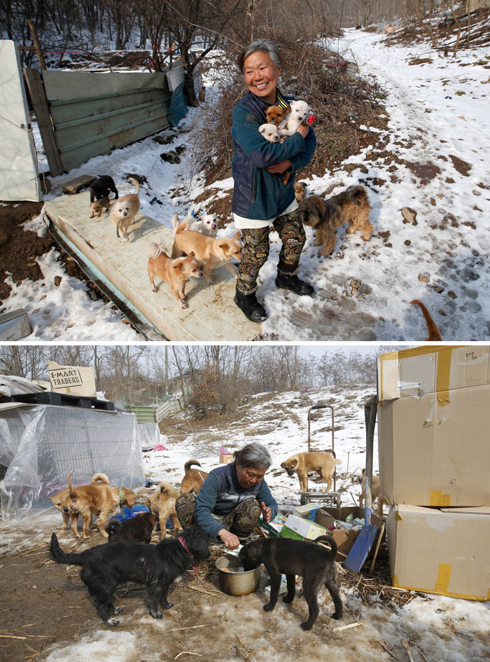 This South Korean Woman Is Raising 200 Dogs She Rescued From Being Sold To The Restaurants