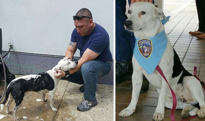 Stray Dog Walks Into Police Station, Gets A Job