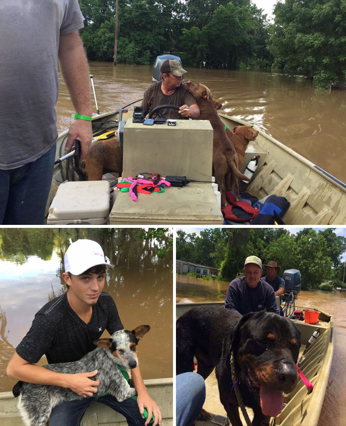 Dad And Son Rescued 30 Dogs Left Behind During The Flood In Brazoria County, Texas