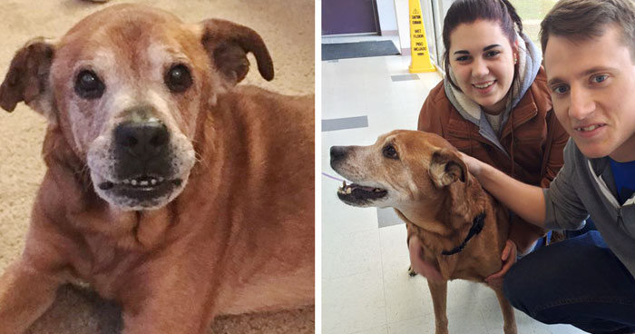 Couple Visits A Shelter To Donate, Leaves With A 17-Year-Old Dog