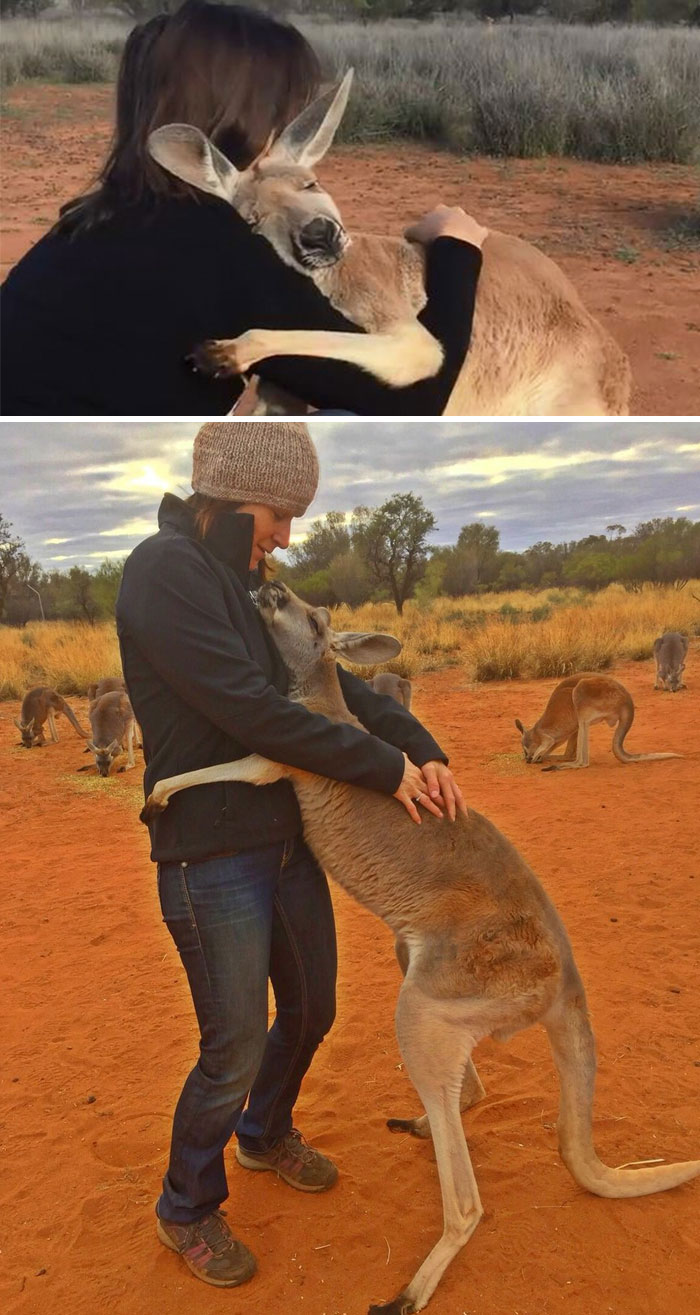 Rescued Kangaroo Hugs Her Rescuers Every Day And Lets Them Know How Grateful She Feels By Giving Them Massive Snuggles