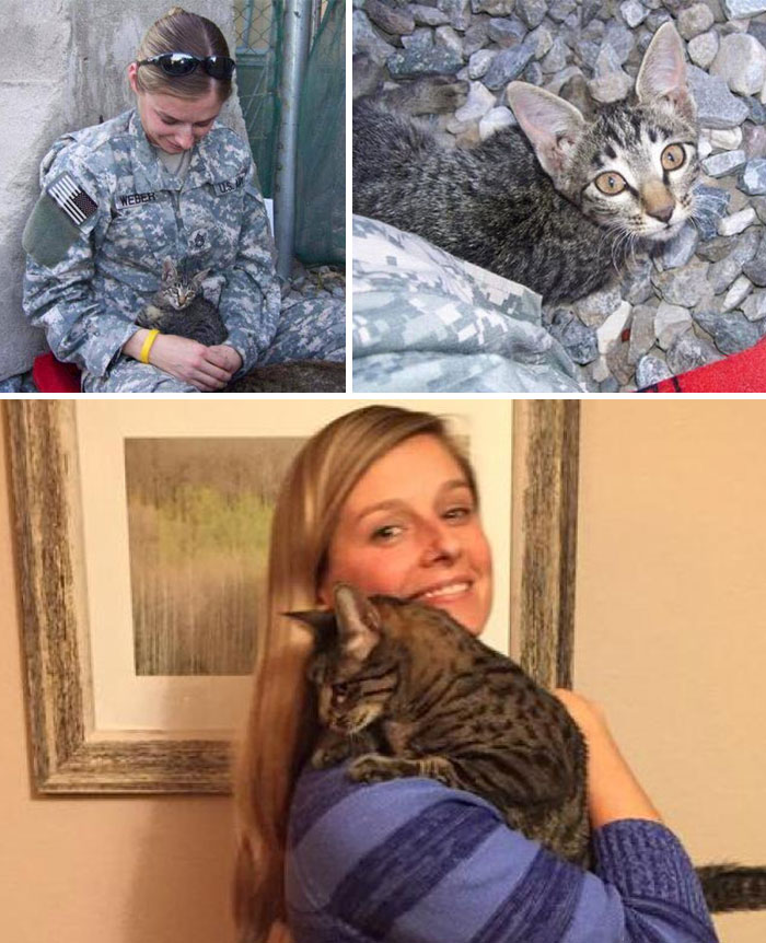 This Soldier Refused To Leave Sick Kitten Behind In Afghanistan, So She Waited Months For The Cat To Be Ready To Fly To The States, And Paid $2,000 In Shipping Costs