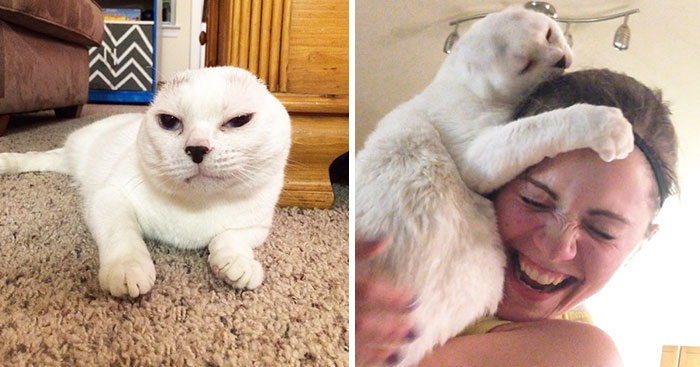 Woman Adopts Earless And Deaf Senior Cat Everybody Ignored, And Later He Helped Her To Deal With Anxiety