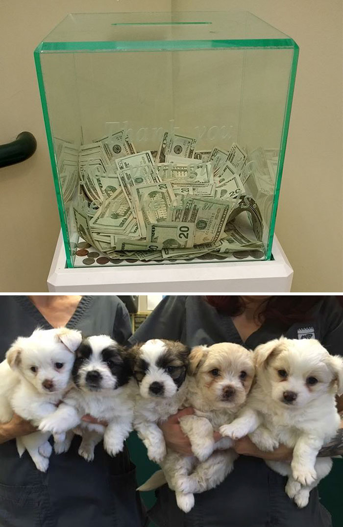 Anonymous Person Put $8,000 Into This Animal Shelter's Donation Box