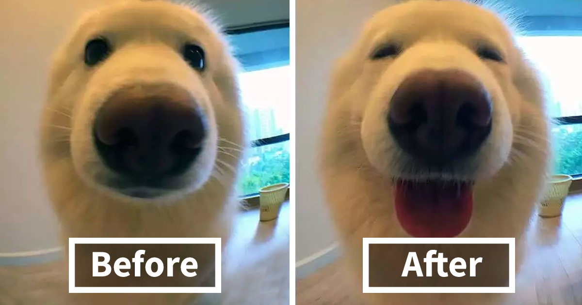 People Are Posting Pics Of Their Animals Before & After Being Called A Good Boy