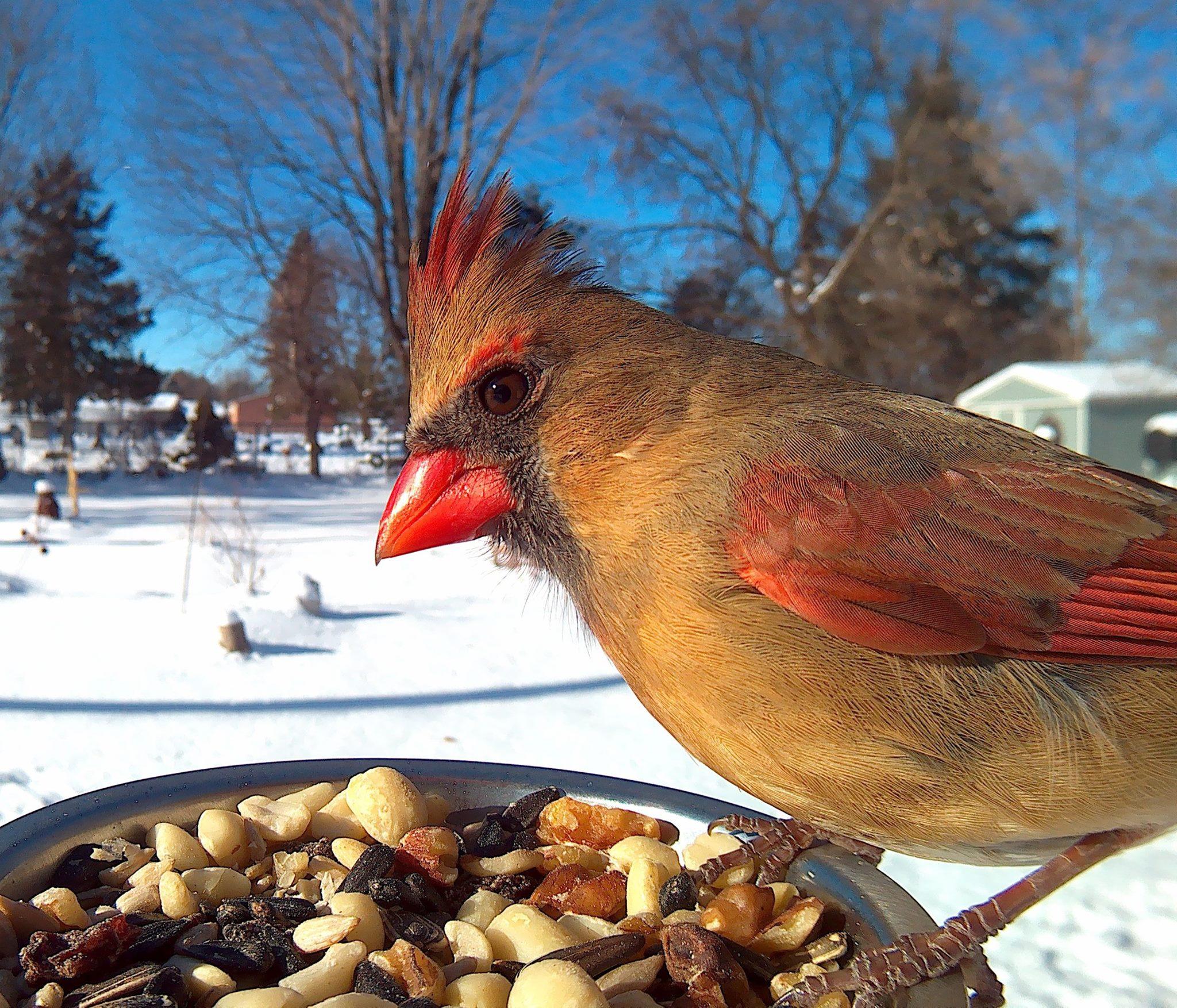 Bird Feeder Photography