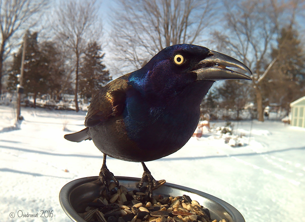 Bird Feeder Photography