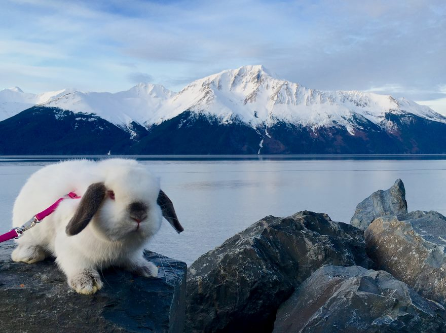 bunny-hiking-buddy-sir-quincey-2