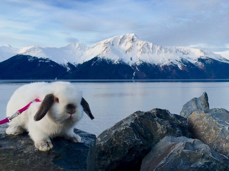 bunny-hiking-buddy-sir-quincey-2