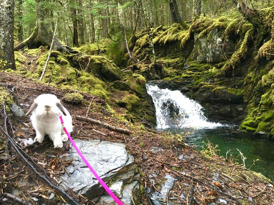 bunny-hiking-buddy-sir-quincey-4