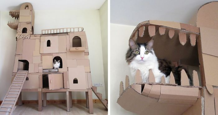 Human Builds A Dragon Shaped Cardboard House For His Cat In Order To